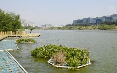 水生态治理3